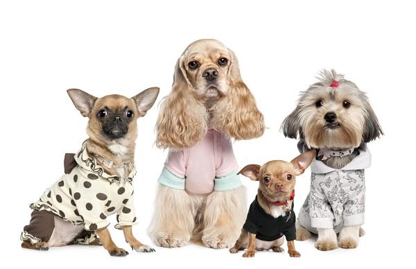 Sản phẩm thời trang cho thú cưng